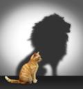 Cat v lion